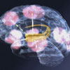 Logo for Introduction to Neuroscience